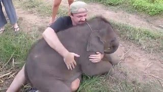Baby Elephants love to cuddle