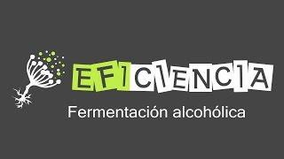 FERMENTACIÓN ALCOHÓLICA. Piruvato descarboxilasa Etanol CO2 Anaerobiosis