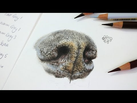 How To Draw a Realistic Dog Nose with Colored Pencil | Step by Step