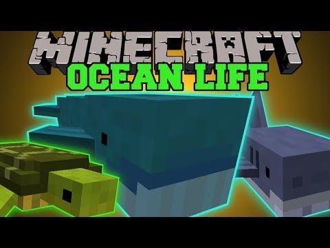 Minecraft: OCEAN LIFE (NEW OCEAN MOBS. CREATE YOUR OWN AQUARIUM!) Mod Showcase