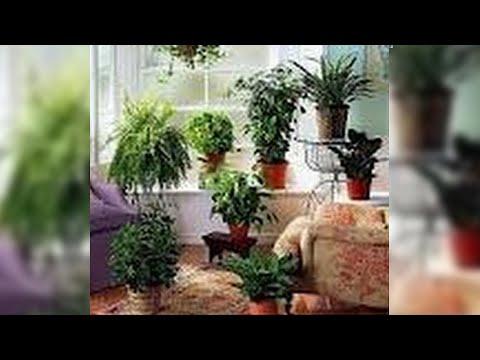 Limpiar las plantas de interior sin qu micos homemade non - Plantas de interior para salon ...
