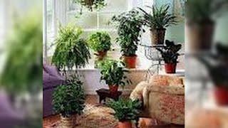 Limpiar las plantas de interior sin químicos. Homemade non toxic cleanser. hEcoDaisy .
