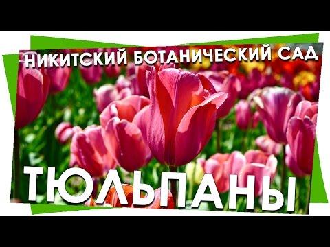 Парад Тюльпанов, Никитский ботанический сад