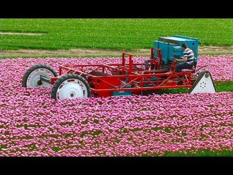 Tulpen koppen / Topping Tulips - Vido Fleur