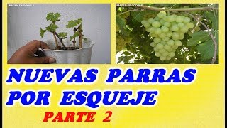 Como Reproducir Parras o Cepas De Uva Por Estaca 2ª PARTE // Grape vines from cuttings PART 2