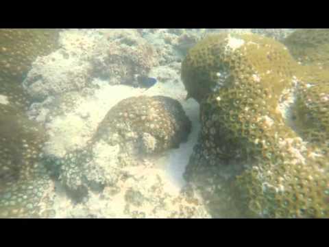 Marine conservation final
