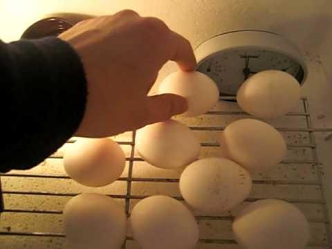 Brutgerät Inkubator Brutmaschine Brutapparat Eigenbau Bauanleitung brutgeräte homemade egg incubator