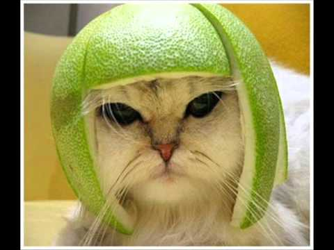 Cats Head Cat With Lime on Head Music