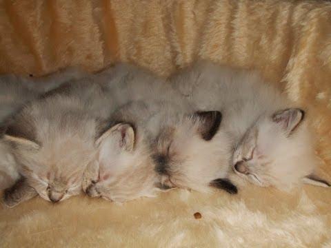 4匹の猫の赤ちゃんが仲良...