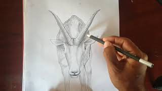 creative drawing pencil ||ten in one funny drawing||Sheep and Vegetables,Fruits