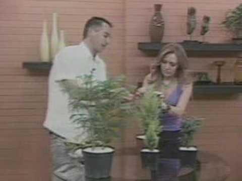 Boris Goercke, cuidado de las plantas