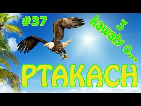 3 Kawały O... Ptakach - Papuga Yogi #37 - Marcin Sznapka