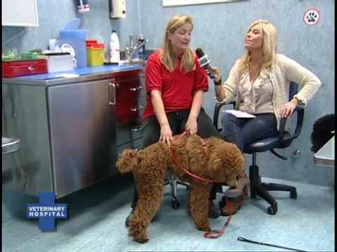 Vet Hosp S1E3 Pet Therapy parte seconda.mp4