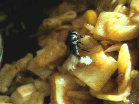 O que afasta moscas