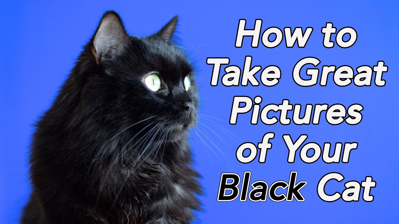 How to take pictures of cats