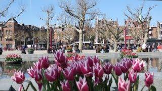 Tulip festival in Amsterdam - april 2019