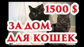 Жильё для кошек за 1500 долларов, 1080p, Cat housing for $ 1500, 1080p