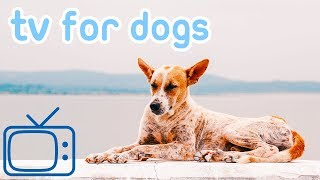 Chill your Dog TV! TV for Dogs with Relaxing Music! NEW 2018!