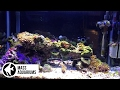 Top 5 tips for Successfully Achieving and Maintaining a Nano Saltwater Reef Aquarium..mp3