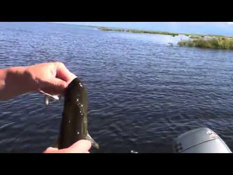 байкал рыбалка на сорах