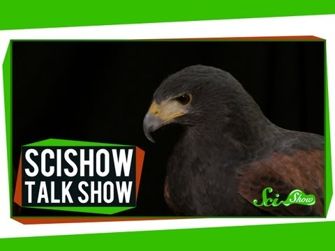 Brain Frames and a Harris's Hawk: SciShow Talk Show #9