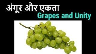 Grapes and Unity , Angoor aur Ekta