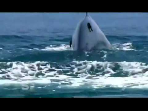 Blue Whales In Srilanka video