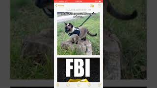 10 funny FBI/Swat pictures