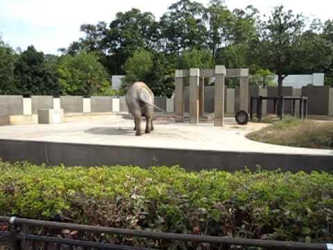 石川動物園 ゾウさん