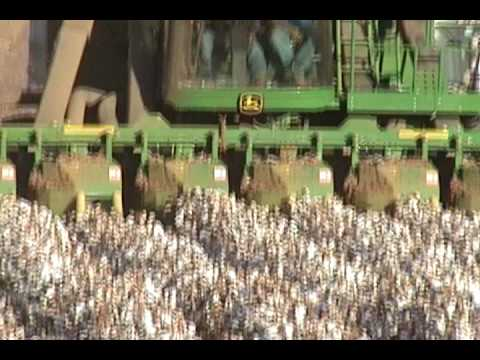 west Texas cotton harvest-2 Video