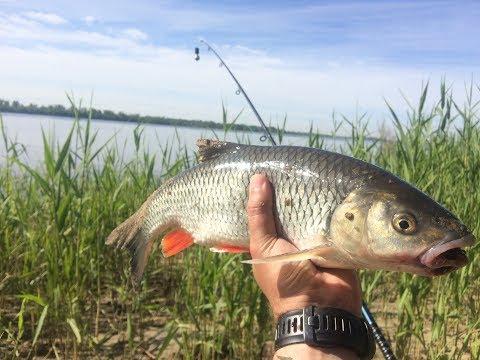 щука из серии наша рыбалка