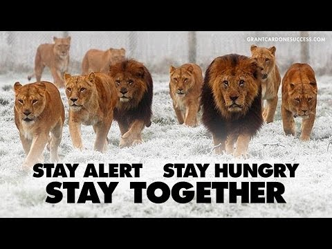 Stay Alert & Stay Hungry - CardoneZone