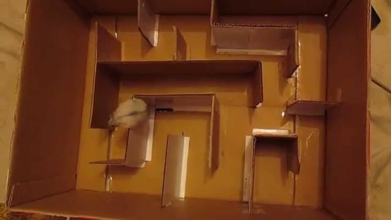 Как сделать хомякам лабиринт