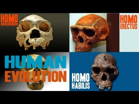 Facts about Human Evolution thumbnail