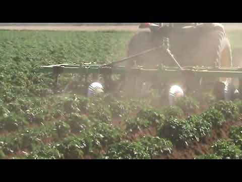 Conformador de camellones Escañuela en plantación de papas Argentina