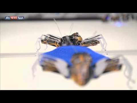"""روبوت """"النمل"""" قد يقوم بدور عمال المصانع"""
