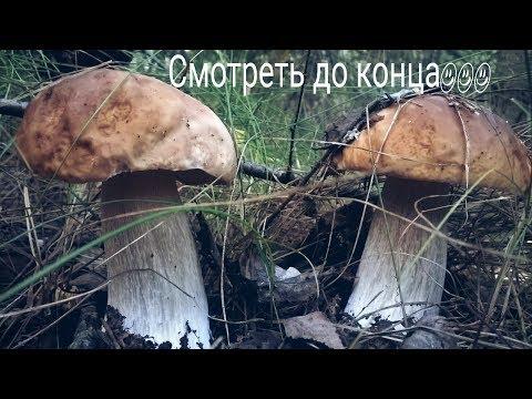 Сбор грибов! Сбор белых грибов и подосиновиков! Удачная поездка за белыми грибами от 08.09.2017☺☺☺