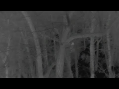 Alabama Bigfoot What did we catch on thermal?