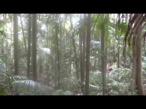 Rain Forest Research - Setting Up New Location