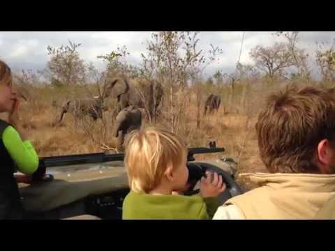 Family surrounded by elephant herd