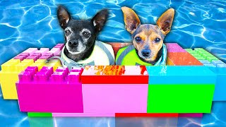 We Built a Giant Boat Made Out of Legos for our Dogs! | PawZam Dogs