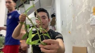 Lan hoa rừng - Hàng sổ bông tết về shop em - 0775614899 - Võ Anh Vũ