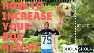 Pet Care - How To Increase Your Dog Height - Bhola Shola