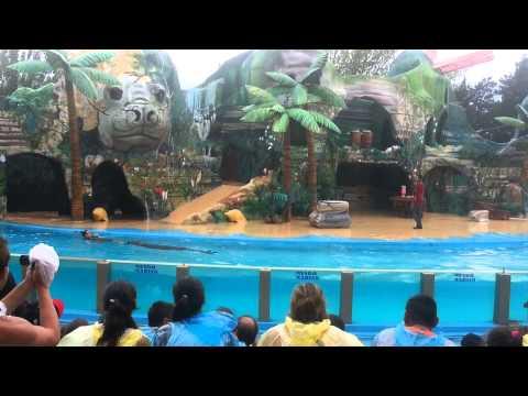 La isla de los lobos marinos - Mundo marino