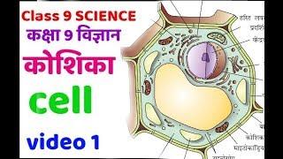 Class 9 science | कक्षा 9 विज्ञान | कोशिका जीवन की मौलिक इकाई | fundamental unit of life