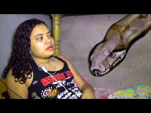 Giant Snake Invades Girl's Bedroom video