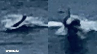 Man spots 'strange sea creature' near Huntington Beach - \