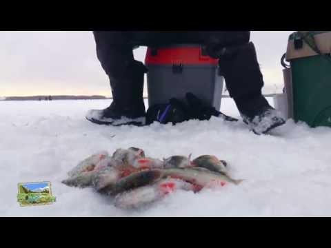 зюзелка рыбалка