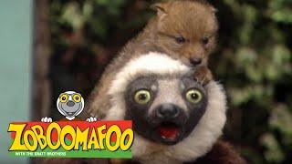 Zoboomafoo 204 - Creature Neighbours (Full Episode)