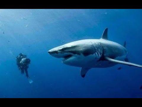 幾分鍾看完歐美驚悚恐怖片《深海逃生》看完手心出汗了!